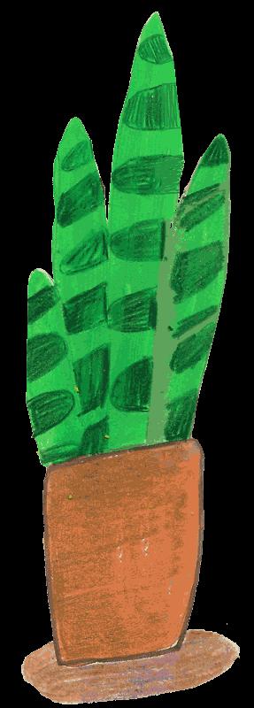 Bild: Zimmerpflanze Aloe Vera im Tontopf
